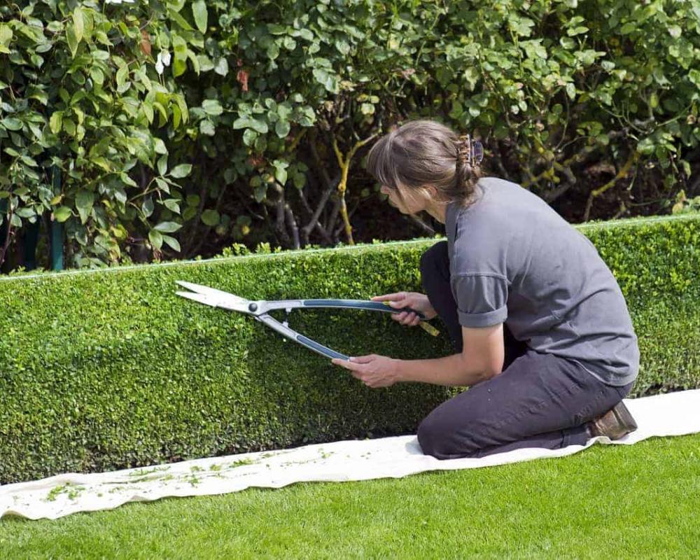 box-hedge-topiary-869073_1280-2